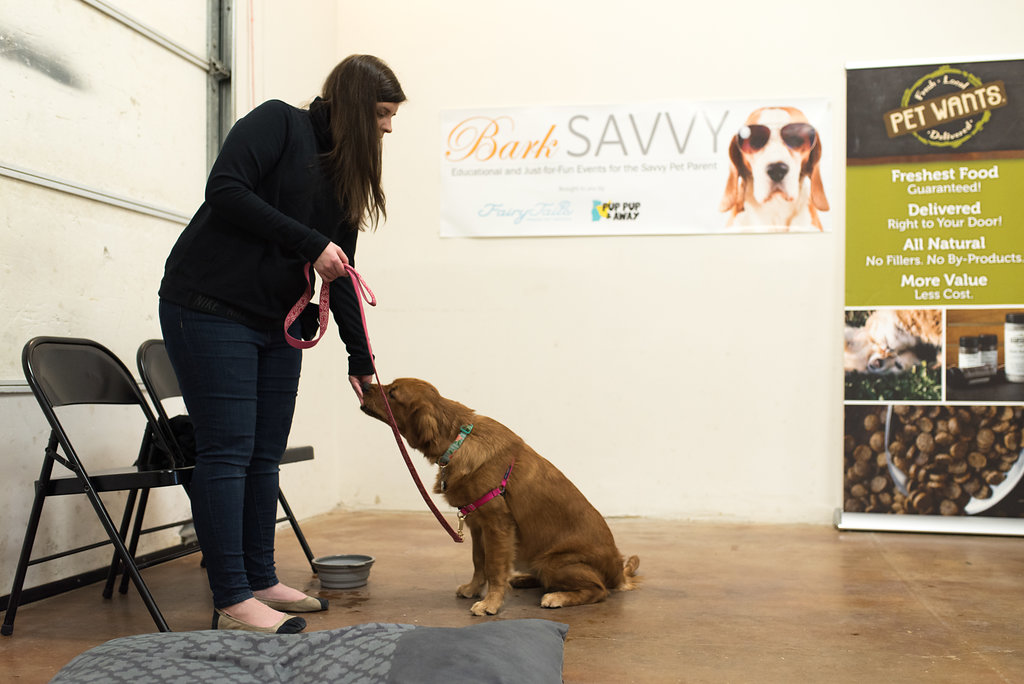 Canine Training Classes – Pup Pup And Away SA