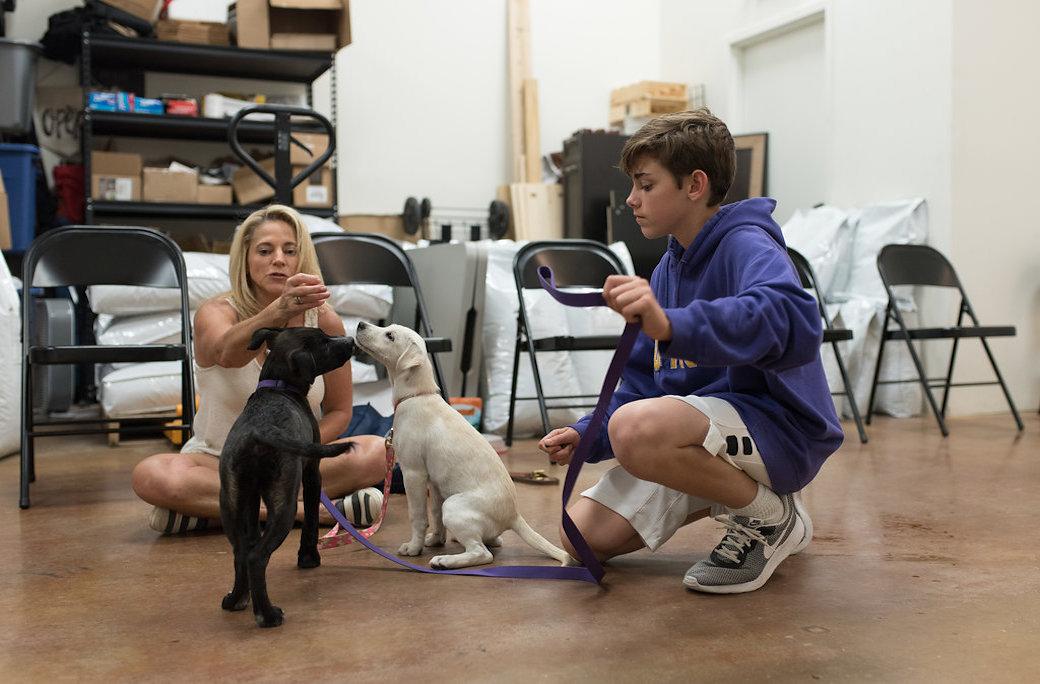 PupPupAndAwaySa Dog Training & Services San Antonio