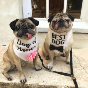 Training Dogs For Your Wedding