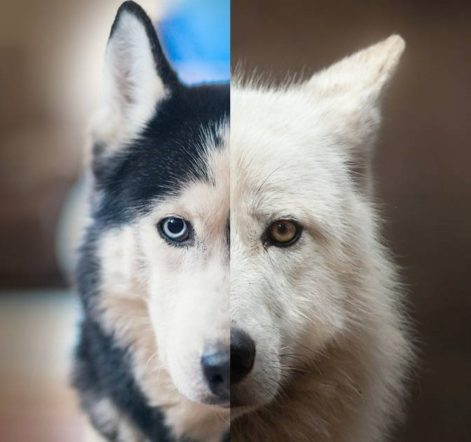 Dominance Theory Part I: A Wolf in Dog's Clothing