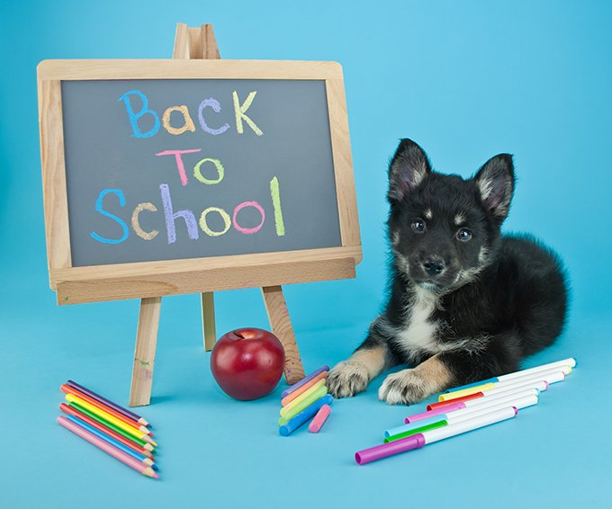Back to School Puppy Blues
